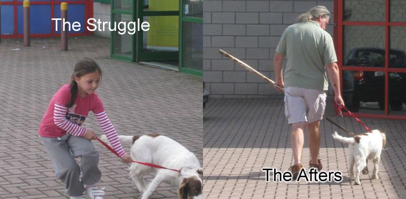 Noel Murphy - Dog Training