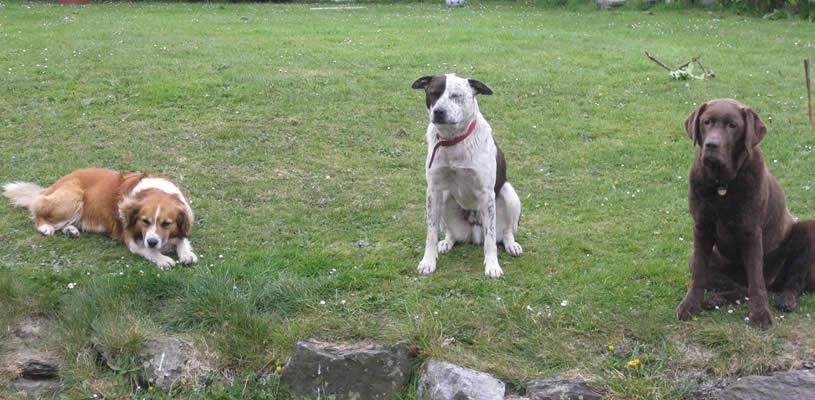 Dog Adoption Service